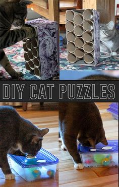 Make your own DIY cat puzzles to keep your kitty entertained!