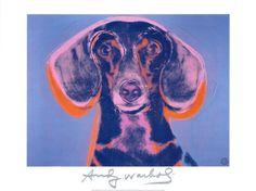 andys dachshund