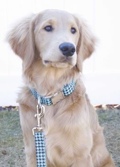 This brightly colored houndstooth print is super fun and flirty! Your pup will be the perfect balance of classic and trendy in this stylish leash! - Comes gift-ready in a black velvet bag - 5' length - Heavy nylon webbing - High quality nickel/steel hardware