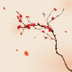 japon, cerisiers en fleur                                                       …