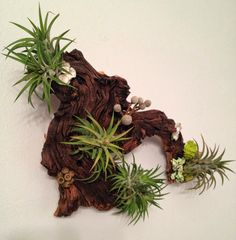 Air Plants and Moss Wall Garden  Living Wall by lovelyterrariums    @Ella Wyllie