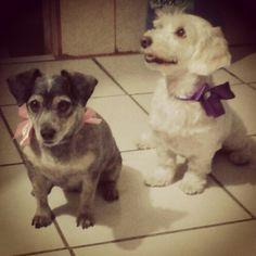 ♥Las princesitas de la casa, Benitta y Luna.♥