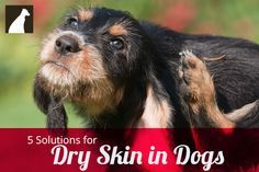 Stop your dog from the scratching and shedding associated with dry skin with these tips.
