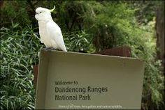 dandenong ranges Vibe Hotel, Cockatoo, Ranges, National Parks, Scenery, Adventure, Live, Landscape, Range