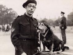 Since its introduction 62 have been awarded to dogs, pigeons, horses and a cat have received the Dickin Medal. Rip (above) was awarded a Dickin Medal in 1945 after sniffing out dozens of air raid victims during the blitz. War Dogs, Animal Heros, Search And Rescue Dogs, Vintage Dog, Service Dogs, Working Dogs, World War Two, I Love Dogs, Doge