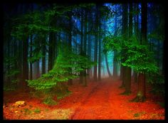 photography by Norbert or Publik_Oberberg on Flickr. The German photographer specializes in misty forests and other fairy tale-like scenes - adding color and drama where he feels they should exist.