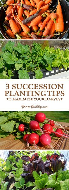 The goal of succession planting is to make the most of your garden space and keep the beds growing and producing fresh harvests. Learn different ways you can succession plant in your garden.