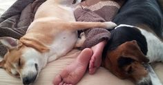 7 Reasons You Should Always Let Your Dog Sleep In Your Bed