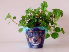 Custom flower pots, visit www.letitiasart.com for your very own custom pet portrait. They look great in any room and make wonderful gifts. #paintedflowerpots