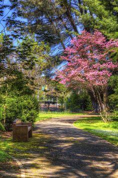 sacramento state university arboretum -