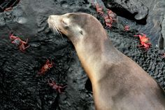 Época de milagros en las Islas Galápagos: el nacimiento de lobos marinos | ANDES