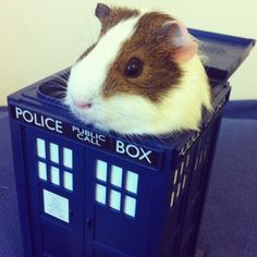 HOLD EVERYTHING, IT'S A GUINEA PIG IN A TARDIS!!!