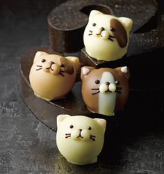 Goncharoff kittycat chocolat