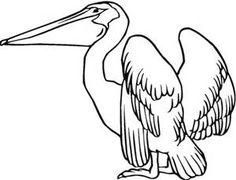 drawing of a pelican - Bing images