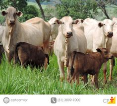 Softwares desenvolvidos na UFV monitoram a alimentação do gado #cursoscpt