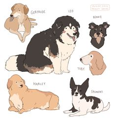 hamotzi - Stuff - — old friends senior dog sanctuary dogs PART 2 (part… - Cute Animal Drawings, Cute Drawings, Pretty Art, Cute Art, Character Art, Character Design, Animal Design, Aesthetic Art, Dog Art