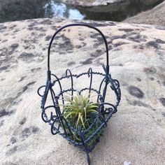 Excited to share the latest addition to my #etsy shop: Wire Heart Basket and Air Plant, Vintage Love, Rustic Valentine, Romantic Gift, Rustic Romantic Wedding