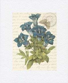 Antiqued Vintage Blue Flower Floral Butterfly Digital Download Art Botanical Nature Print with French Script