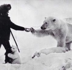 Urso Polar e seus filhotes alimentados com leite condensado por soldado soviético 1950