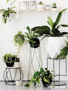 In een zwart/wit interieur geeft fris groen kleur en gezelligheid!