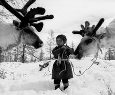 ..... priceless image of a petite Mongolian girl tending her charges by Dutch photographer Jeroen Toirkens. It's from Nomad, his visual recording of the Northern Hemisphere's last living nomadic peoples, from Greenland to Turkey. His journey to create it took ten years.