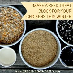 Homemade Flock Seed Block - A Warming Winter Treat to Beat Boredom - Fresh Eggs Daily Blog - GRIT Magazine  Read more: http://www.grit.com/animals/poultry/chickens/homemade-flock-seed-blocka-warming-winter-treat-to-beat-boredom.aspx#ixzz2k7lXjCJf