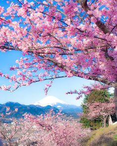 Early-blooming sakura cherry blossoms create pink-tinged wonderlands in Japan Wallpaper Nature Flowers, Flower Phone Wallpaper, Cherry Blossom Season, Sakura Cherry Blossom, Cherry Blossoms, Landscape Photography, Nature Photography, Japon Illustration, Aesthetic Japan