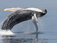 website with a large variety of whales and photos and information about each one