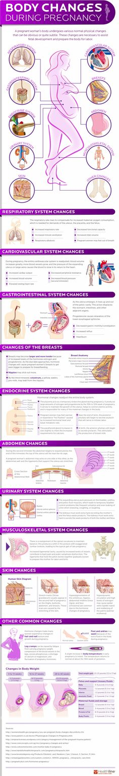 How a Woman's Body Changes During Pregnancy (Infographic). Body Changes During Pregnancy Week By Week Baby On The Way, Baby Kind, Baby Love, Pregnancy Info, Pregnancy Health, Early Pregnancy, Pregnancy Anatomy, Pregnancy Chart, Symptoms Pregnancy