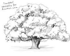 How to draw an oak tree step 5