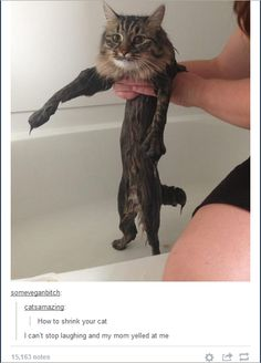 I need to do this to my cat.