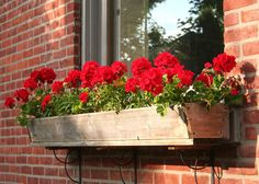 Geraniums In A Flower Box by Laurel Talabere - Geraniums In A ...