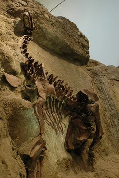 Dinosaurs In Their Time, Carnegie Museum of Natural History. Image Credit: Desiree N. Williams, via Flickr.