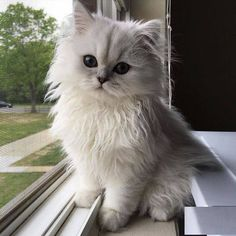 Cute Kittens, Cute Baby Cats, Cute Little Animals, Cute Funny Animals, Pretty Cats, Beautiful Cats, Animals Beautiful, Funny Cat Compilation, Cat Aesthetic