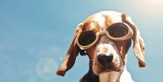With summer peeking its sunny face just around the corner Hills is running an awsome promo giving pooch and kitty lovers the chance to get into the #Spring Fever!