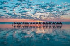 Dakhla - Morocco A line of camels against a perfect sunset. Beautiful World, Beautiful Places, Beautiful Pictures, Amazing Places, Amazing Sunsets, Beautiful Sunset, Amazing Things, Amazing Nature, Simply Beautiful