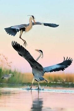 Pretty Birds, Beautiful Birds, Animals Beautiful, Nature Animals, Animals And Pets, Cute Animals, Exotic Birds, Colorful Birds, Sea Birds