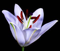 40 Meilleures Images Du Tableau Fleurs Beautiful Flowers Flowers