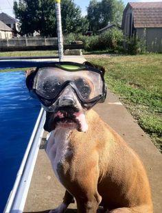 Dog pics funny (15 pics)