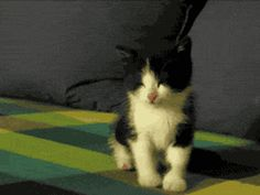 Friday Cat Pictures Funny Gif #8210 - Funny Cat Gifs|Funny Gifs|Cat Gifs
