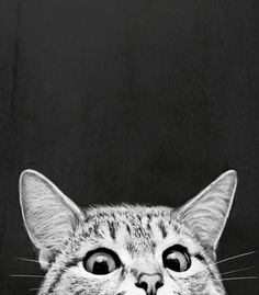 Available for purchase  Cat Kitty Cat Peeking Cute Black and White Drawing…