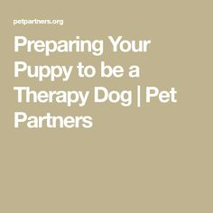 I just got a puppy and we want to become a therapy animal team. This is a question that many people ask Pet Partners. Labradoodle, Mini Goldendoodle, Pet Dogs, Pets, Real Dog, Diabetic Dog, Getting A Puppy, Dog Rules, Homemade Dog Treats