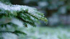 cinemagraph gif nature snow photography cinemagraph winter ice forest drop cinemagraphs drops frost living stills twig