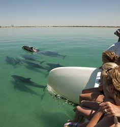 Em sintonia com os golfinhos - passeios de barco no Rio Sado com a Vertigem Azul