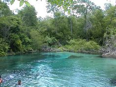 Lake City, FL : Springs at Ichetucknee State Park