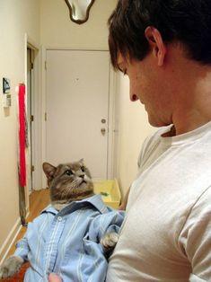 Just a cat, wearing a light blue dress shirt.