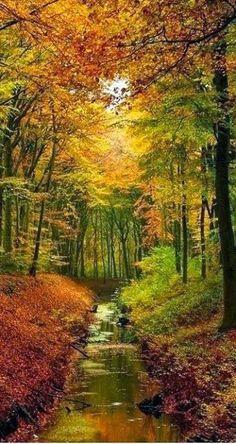 Mulheres em Círculo: O Significado do Outono