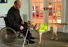Assistance Dogs Tasks - Assistance Dogs Task Work, Service Dogs Tasks