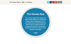 A look at how the human eye and brain process images