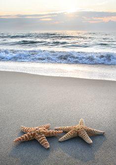 starfish by Patrick Hayes ...
